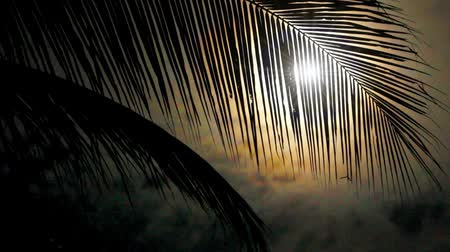 пальмовые деревья : Night in tropics with palm tree and full moon.