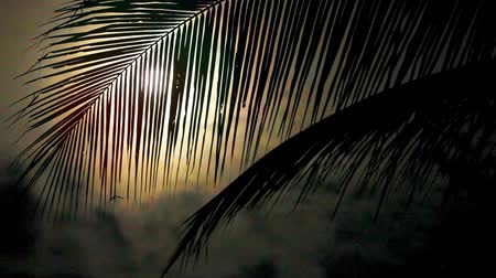 полный : Night in tropics with palm tree and full moon.