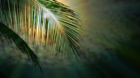 coconut palm tree : Night in tropics with palm tree and full moon.