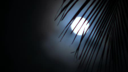 clima tropical : Night in tropics with palm tree and full moon.