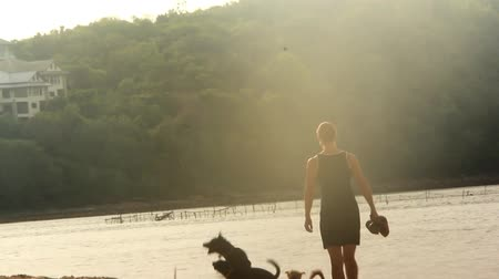 bulls balls : Young woman walking with her dogs on the beach Stock Footage
