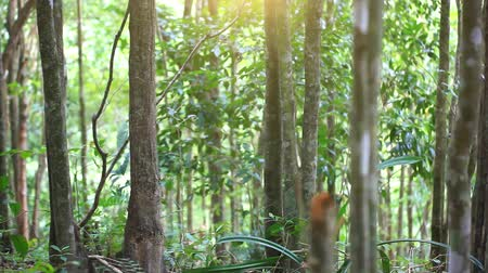 deep forest : Green jungle forest with sunlight in Thailand. Blurred background. HD. 1920x1080 Stock Footage