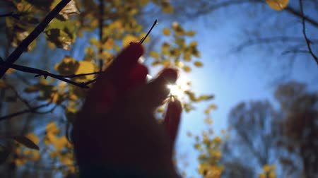 запачканный : Hand touches the sun at autumn birch leaves on the sky background Стоковые видеозаписи