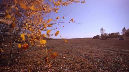 panorâmico : Autumn panorama in forest at field with a sun Stock Footage