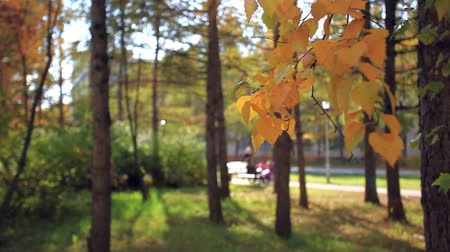 ramos : Blurred background of woman with a child sitting on the bench and other mom walking With baby carriage in park autumn in foreground focused birch branches