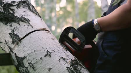 обрезки : Man cuts away fresh birch in the forest, using electric chainsaws in slowmotion. 1920x1080. hd
