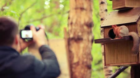 chipmunk : Defocused Man takes a picture from his camera on squirrel in autumn forest. 1920x1080 Stock Footage