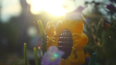 calyx : Beautiful colorful sunflower and other flowers in the summer garden in slowmotion with sunshine and lense flare effects. 1920x1080