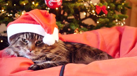 brit : Cute Maine Coon cat as Santa Claus wears christmas cap sits on the pillow at a beautiful new year decorated tree. 3840x2160 Stock mozgókép