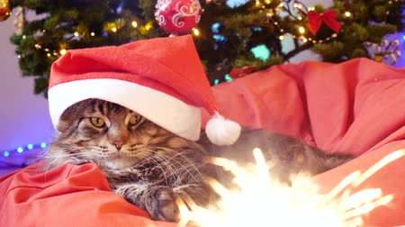 brit : Funny Maine Coon cat as Santa Claus wears christmas cap sits on the pillow at a beautiful new year decorated tree and bengal lights on a foreground. 3840x2160