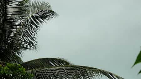 kumlu : Storm winds blowing palm trees on tropical island. 3840x2160. 4k Stok Video