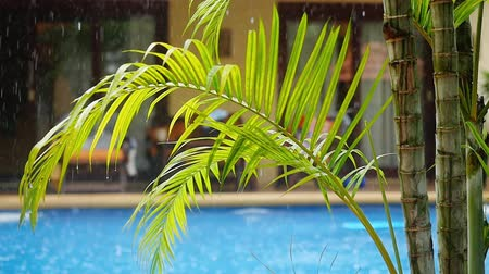 konak : Palm branch on the water pool in the rain. Slow motion. 1920x1080