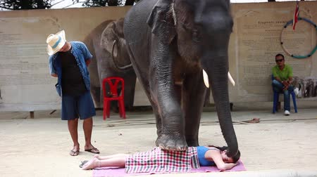 probóscide : Thailand, Koh Samui, 9 february 2016. Performance of elephants on the elephant show. Elephants perform various tricks for spectators. The animal makes a massage to the person with the foot. 1920x1080 Vídeos