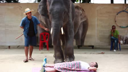 probóscide : Thailand, Koh Samui, 9 february 2016. Performance of elephants on the elephant show. The animal makes a massage to the person with the foot. Footage with audio sound. 1920x1080 Vídeos