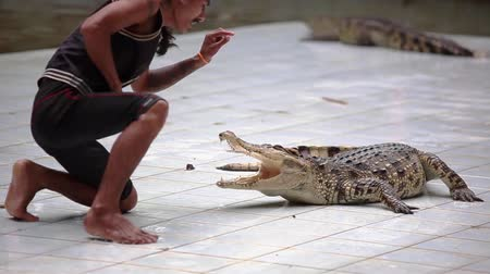alligator head : Thailand, Koh Samui, 9 february 2016. Crocodile show at Crocodile Farm. Extreme trick with dangerous animals. Man puts his hand in the mouth of the crocodile. 1920x1080