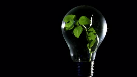 efektywność : Plant in light bulb, black