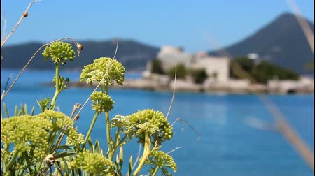 peaceful : Mediteranian plants, shallow depth of field Stock Footage