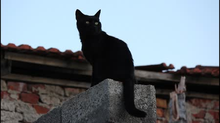 Ко : Black cat on the wall