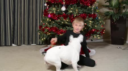 köpek yavrusu : Boy and French Bulldog puppy playing at Christmas