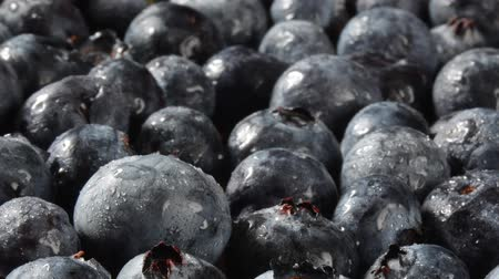 Pan across blueberries with dew drops