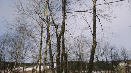 trees in winter, background