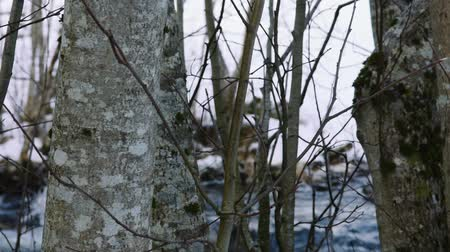trees with river in winter, background