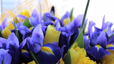 Bouquet of irises with tulips