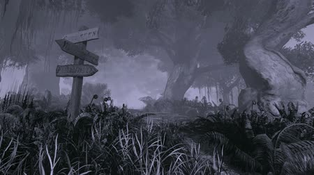 tek renkli : Scary mystical forest at night. Locked down (no camera movement).