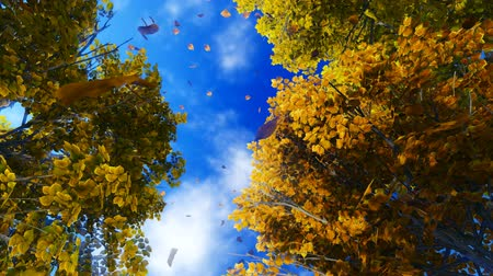 fall through : Ð¡amera moves through the falling leaves to the sky Stock Footage