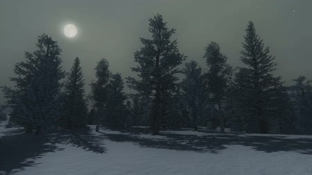 mehtap : Nighttime view of the snowy pine forest under the full moon Stok Video