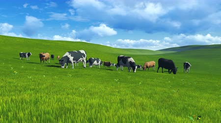 луг : Herd of cows on pasture