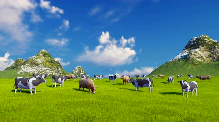 otlama : Herd of dairy cows graze on a verdant alpine pasture at sunny day. Mountain peaks on the background.