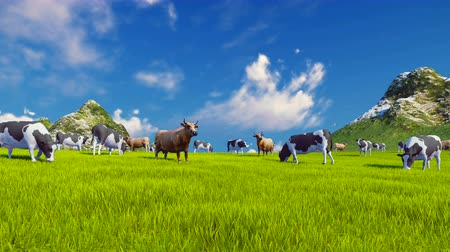 pettyes : Dairy cows graze on a green alpine meadow with mountain peaks on the background