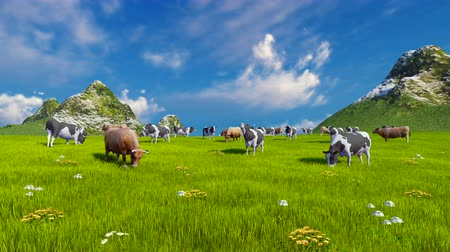 benekli : Herd of dairy cows graze on a green alpine meadow with mountain peaks on the background Stok Video