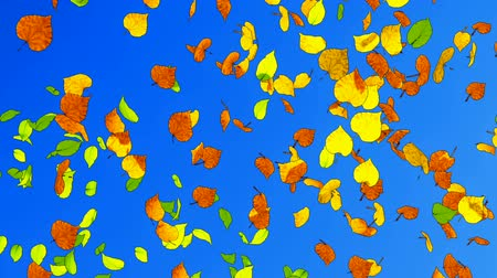 folhas : Close up of autumn leaves falling in slow motion on bright blue background. Fall season abstract cartoon animation.