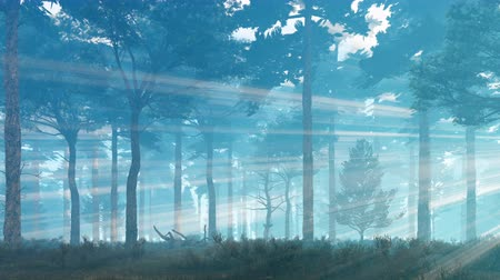 enevoado : Foggy mystical pine forest with sunbeams shining through the trees at misty dawn or dusk. Pan right shot.