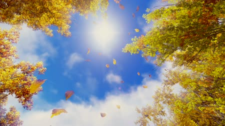 napos : Motion through golden autumn leaves falling from trees in slow motion against sunny sky background