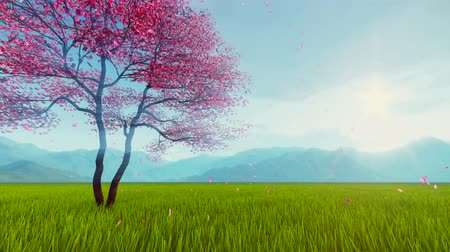 güneş ışını : Spring scenery with single blossoming sakura cherry tree and pink petals falling on fresh grass in slow motion against hazy mountains background Stok Video