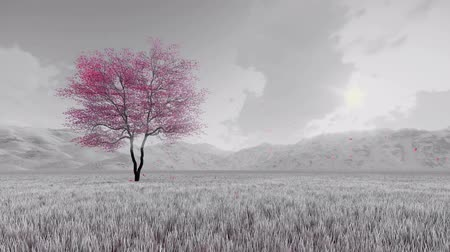 fantasia : Black and white fantasy spring scenery with single pink blooming sakura cherry tree and flower petals falling in slow motion against hazy mountains 4K Vídeos