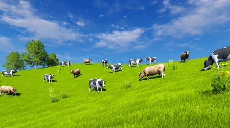 pettyes : Countryside scenery with a herd of mottled dairy cows grazing on green pasture under blue cloudy sky at spring day. Realistic 3D animation.