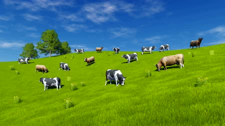 pettyes : Herd of mottled dairy cows graze on the open meadow covered with fresh green grass at spring day. Tilt up shot. Realistic 3D animation.