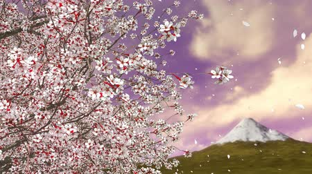 цветение : Close-up of sakura cherry tree in full blossom and flower petals falling in slow motion against Mt Fuji