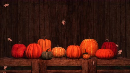tykev : Thanksgiving autumn pumpkins festive 3D background Dostupné videozáznamy