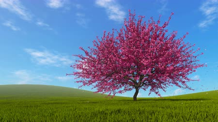 oriental cherry tree : Spring landscape with blossoming sakura tree
