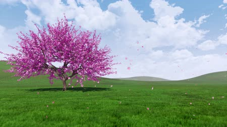 oriental cherry tree : Spring landscape with blooming sakura cherry tree