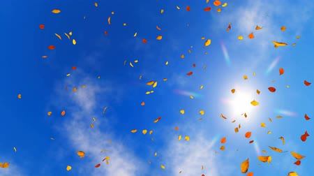 aşağıda : Looking up at sunny sky with falling autumn leaves 3D animation Stok Video
