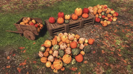 Autumn harvest of pumpkins on rural farmers market High angle view Dostupné videozáznamy