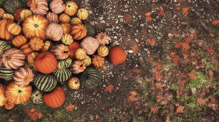 tykev : Close-up top view of various colorful autumn pumpkins piled on ground at outdoor rural farmers market for Thanksgiving or Halloween holidays