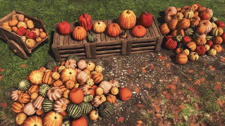 Autumn harvest of various colorful pumpkins laid out on wooden crates and on ground at outdoors farmers market for Thanksgiving or Halloween holidays Dostupné videozáznamy