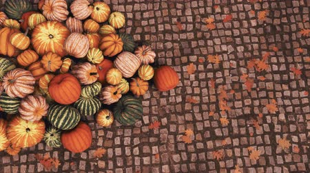 tykev : Close-up top view of various colorful autumn pumpkins piled on old cobblestone pavement at outdoors country market for Thanksgiving or Halloween holidays
